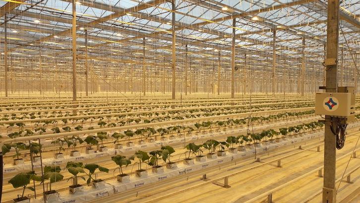 luces asimilacion cultivo
