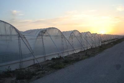 tunel ligero rufepa fresas