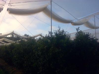 Rufepa retactable roof nethouse