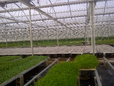 nursery rufepa 2