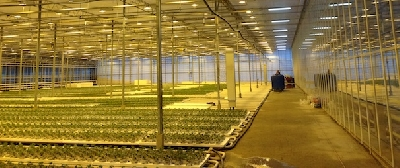 semillero luces 2