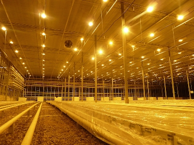 Invernadero Cristal Kazakstan