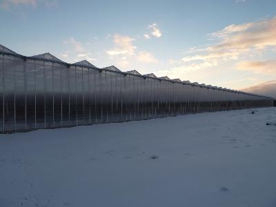 Invernaderos de Cristal