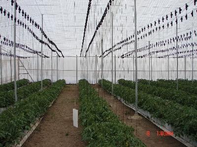 Invernaderos de Plástico Parral o Almería