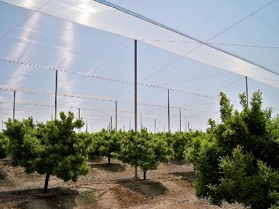 Umbráculo Malla sombra: Frutas y cítricos